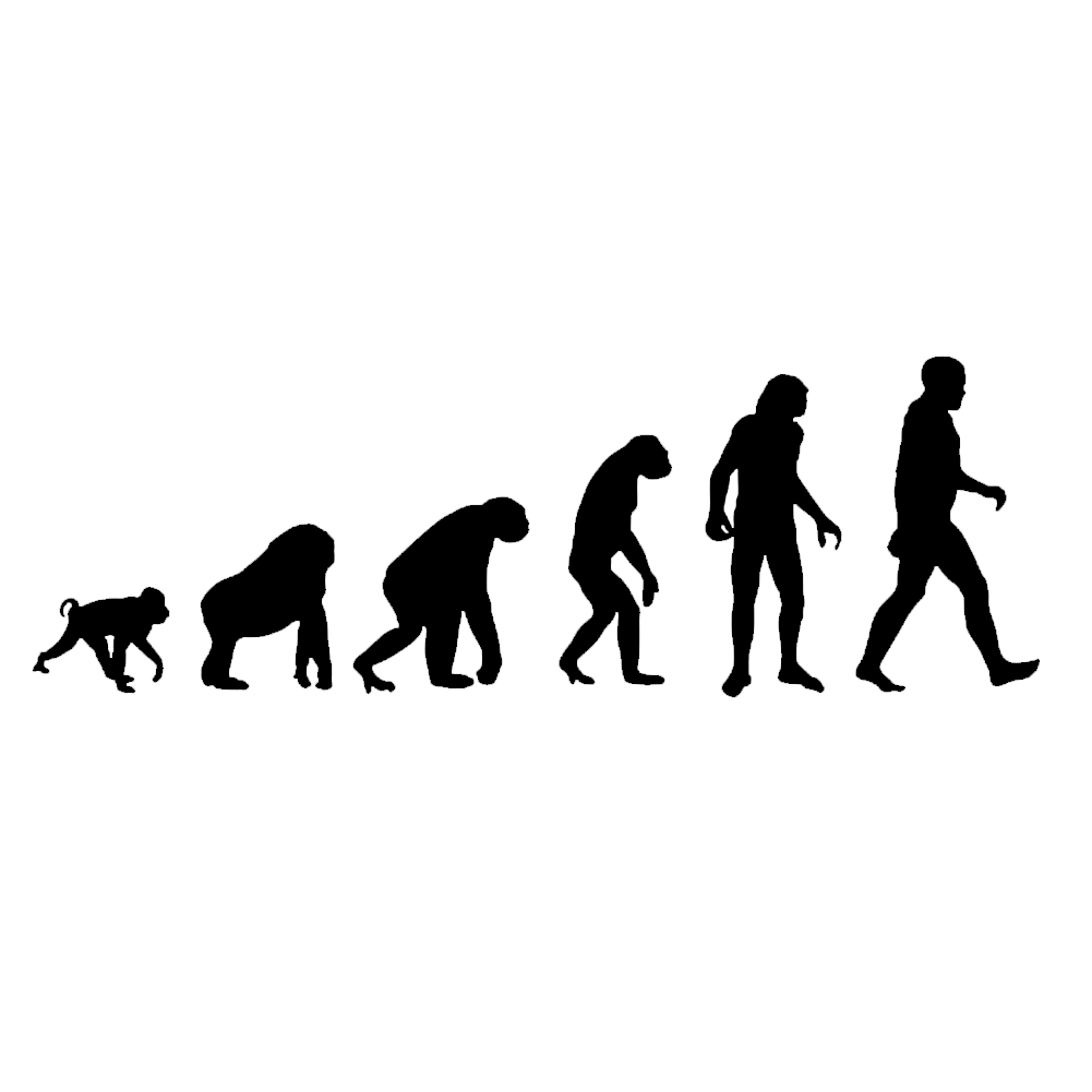 Theory Of Evolution Darwin Ape Human Vinyl Sticker Car Decal